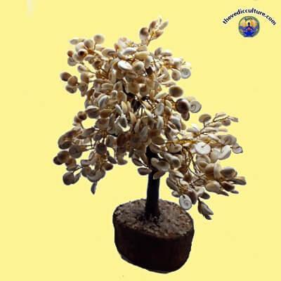 Gomti Chakras tree